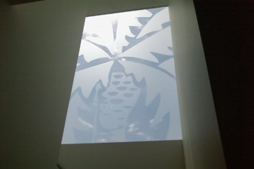 decorative window film project plant